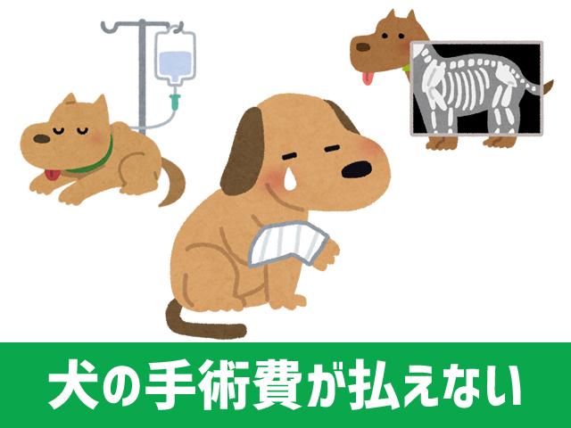 dog_operation_1